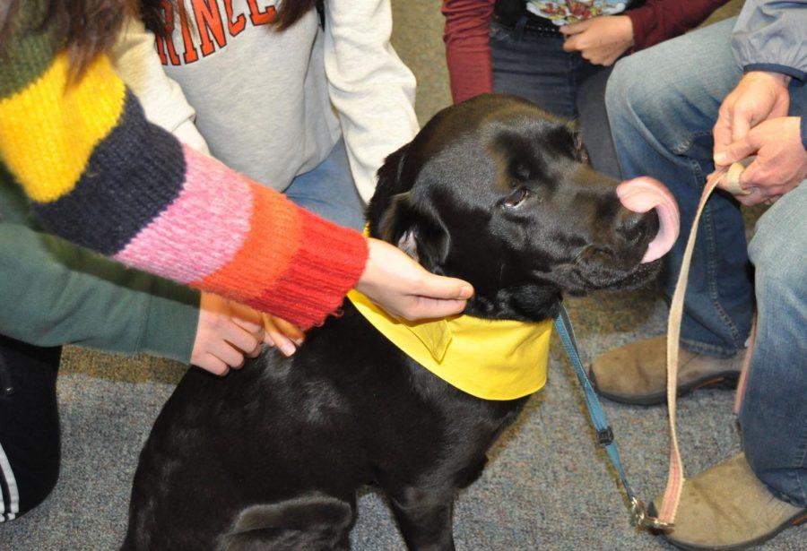 Wellness Center Offers Service Animal Interaction